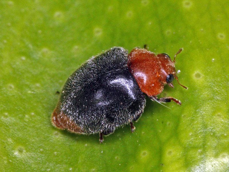 entomologia-descripcion-img